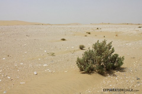 Qatar Desert: Road Trip Exploration