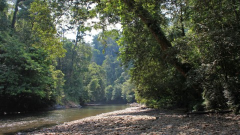 Ulu Temburong National Park: Brunei's Green Jewel