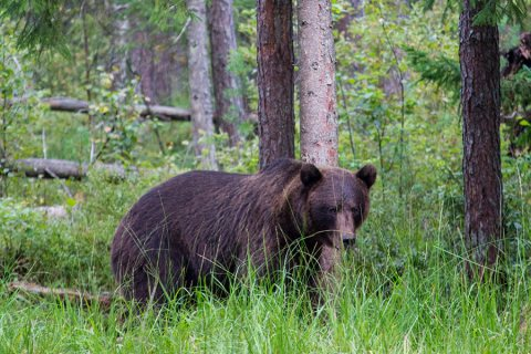 Bear Watching In Estonia: Spending The Night In A Hide