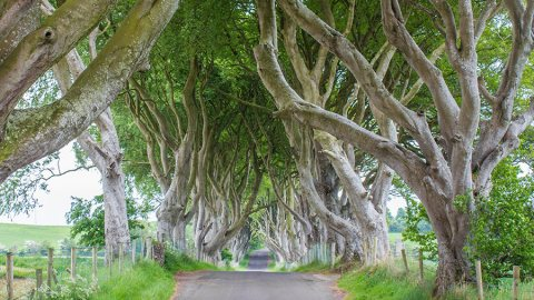 The Dark Hedges: Tortured Trees And A Photographer's Paradise, Northern Ireland