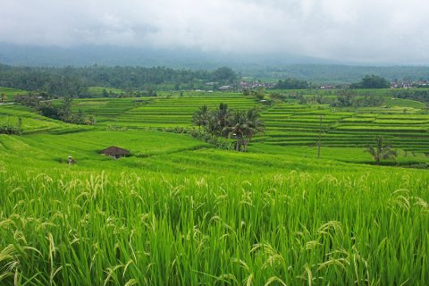 Jatiluwih – The Most Spectacular Rice Terraces of Bali, Indonesia