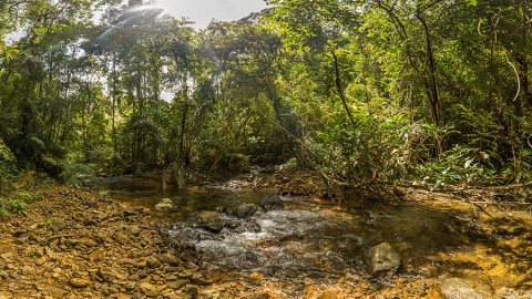 Koh Chang Jungle Trekking: Crossing Thailand's Third Largest Island