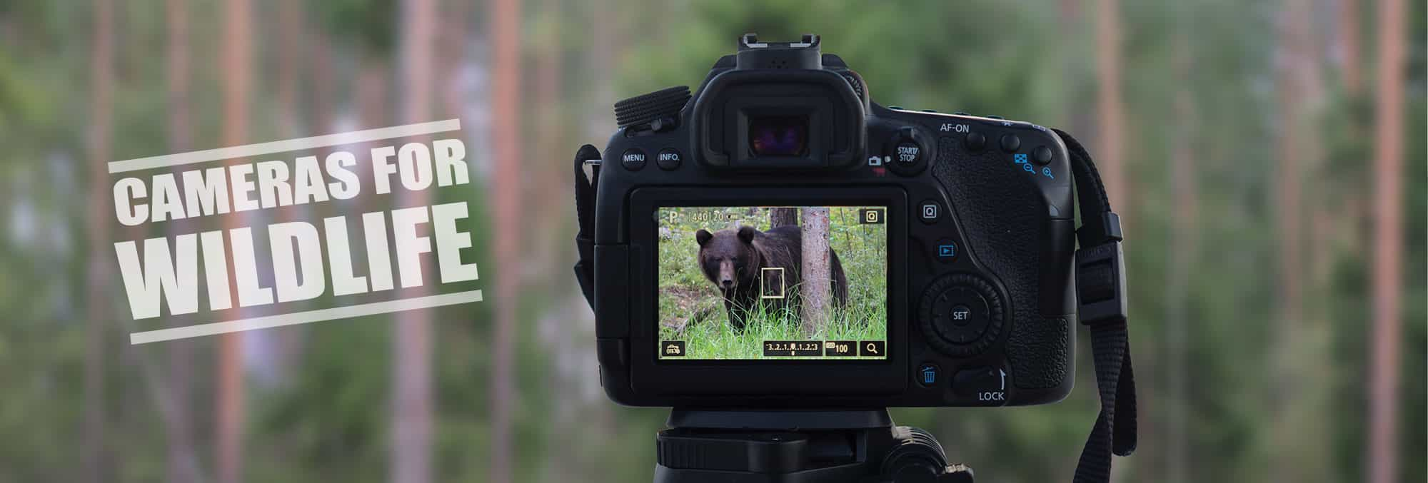 Best Camera for Wildlife Photography - Reviews and Guide