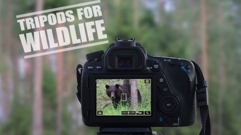 Best Tripod for Wildlife Photography – Our 5 Top Picks