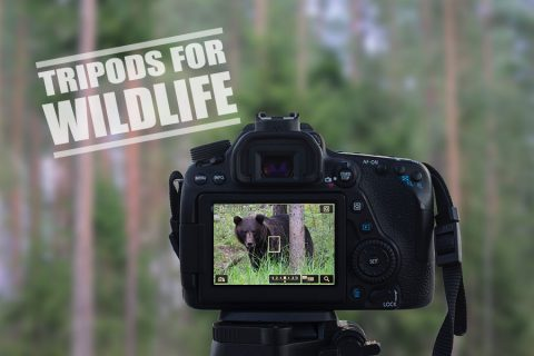 Best Tripod for Wildlife Photography – Our 6 Top Picks